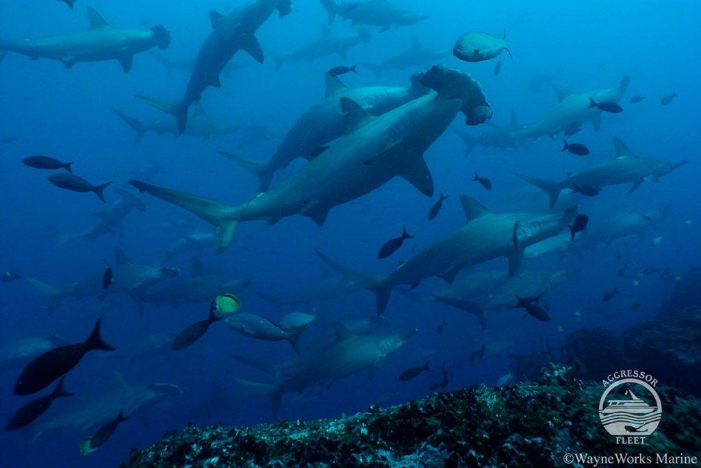 Galapagos Islands liveaboard trip
