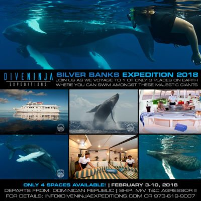 Dive Ninjas Swim with whales in Silver Bank Dominican Republic ad