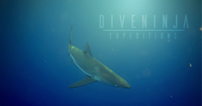 Diving with silky sharks in Cabo San Lucas Mexico