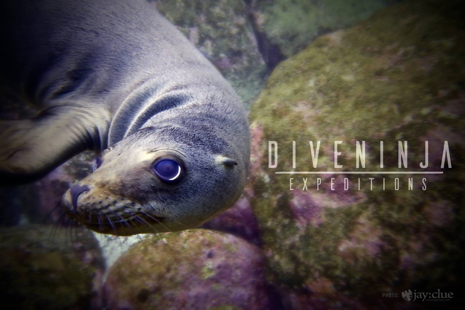 Diving with sea lions in La Paz Baja Mexico