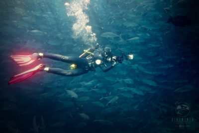 Scuba diving with giant schools of Jacks in Cabo Pulmo
