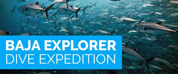Baja Explorer Dive Expedition