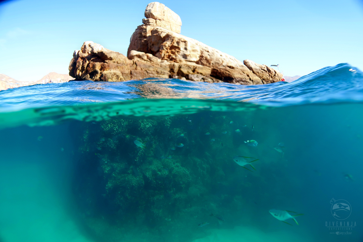 Pelican Rock, Los Cabos Above and below