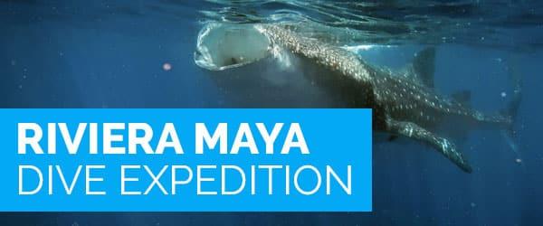 Riviera Maya Dive Expedition