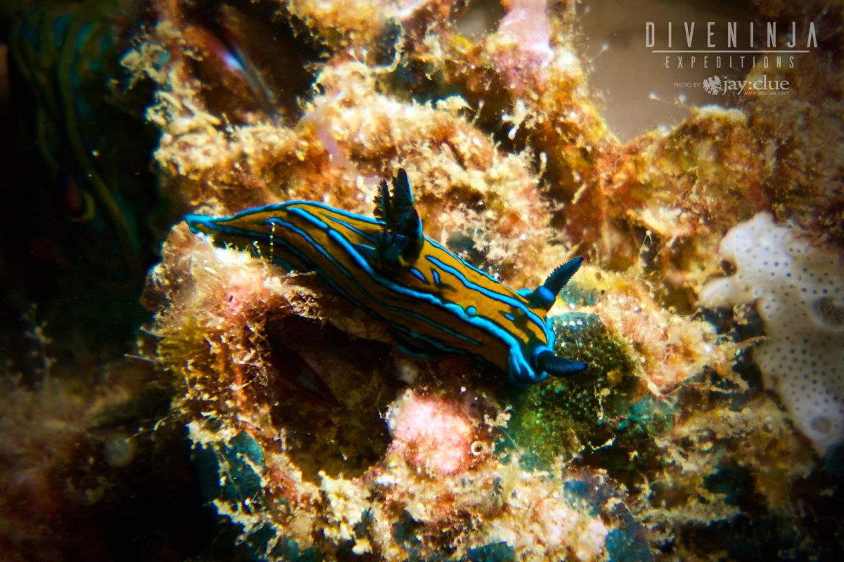 Nudibranch while scuba diving in Los Cabos, Mexico