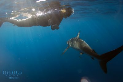 shark diving in Cabo San Lucas, Mexico