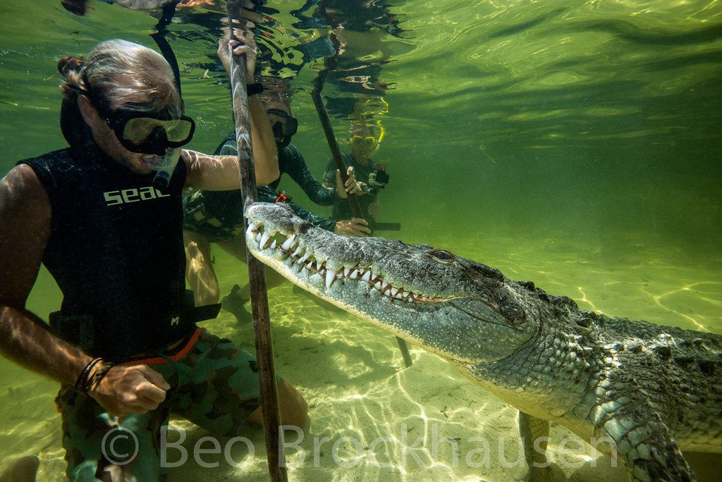 Dive with crocodiles in Xcalak Mexico