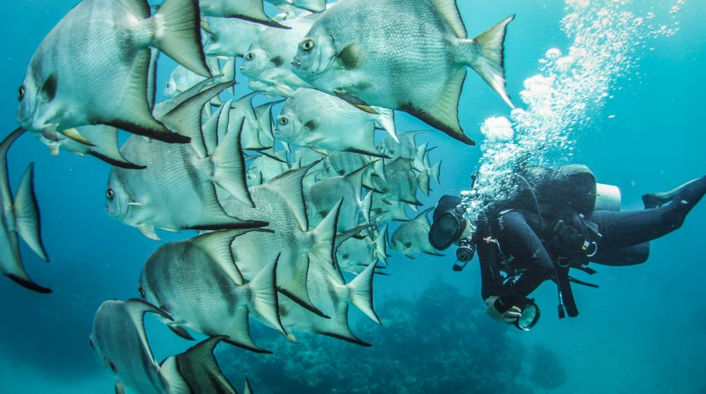 Scuba diving reefs in Banco Chinchorro and Xcalak Mexico