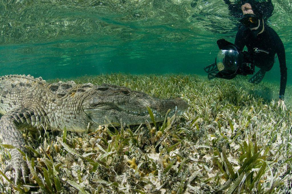 Dive with crocodiles in Chinchorro Mexico