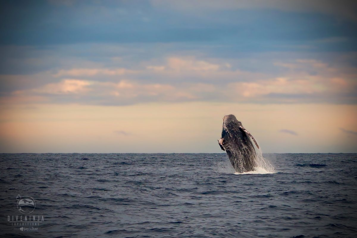 Humpback whale watching in Cabo San Lucas, Los Cabos, Mexico