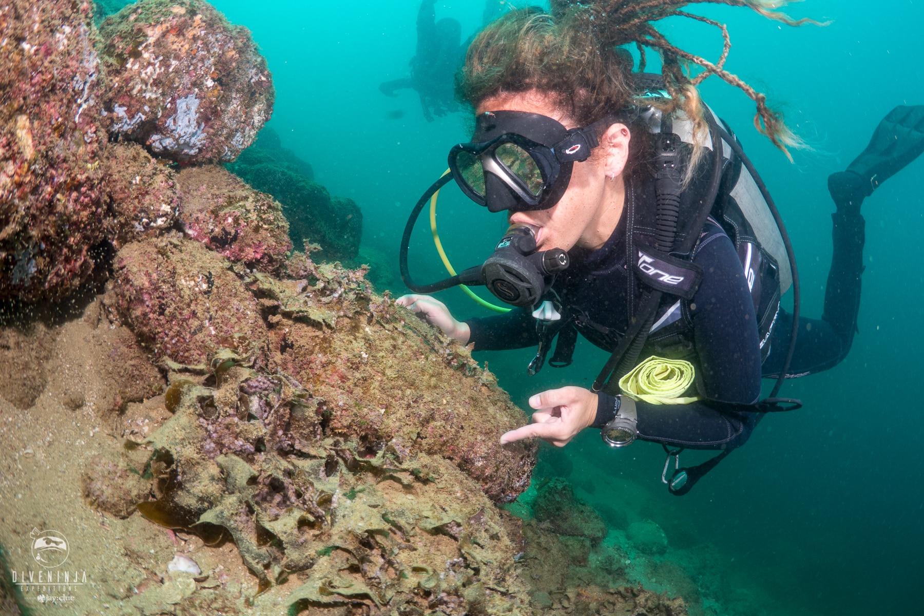 PADI Women's Dive Day 2018. Cabo San Lucas Mexico