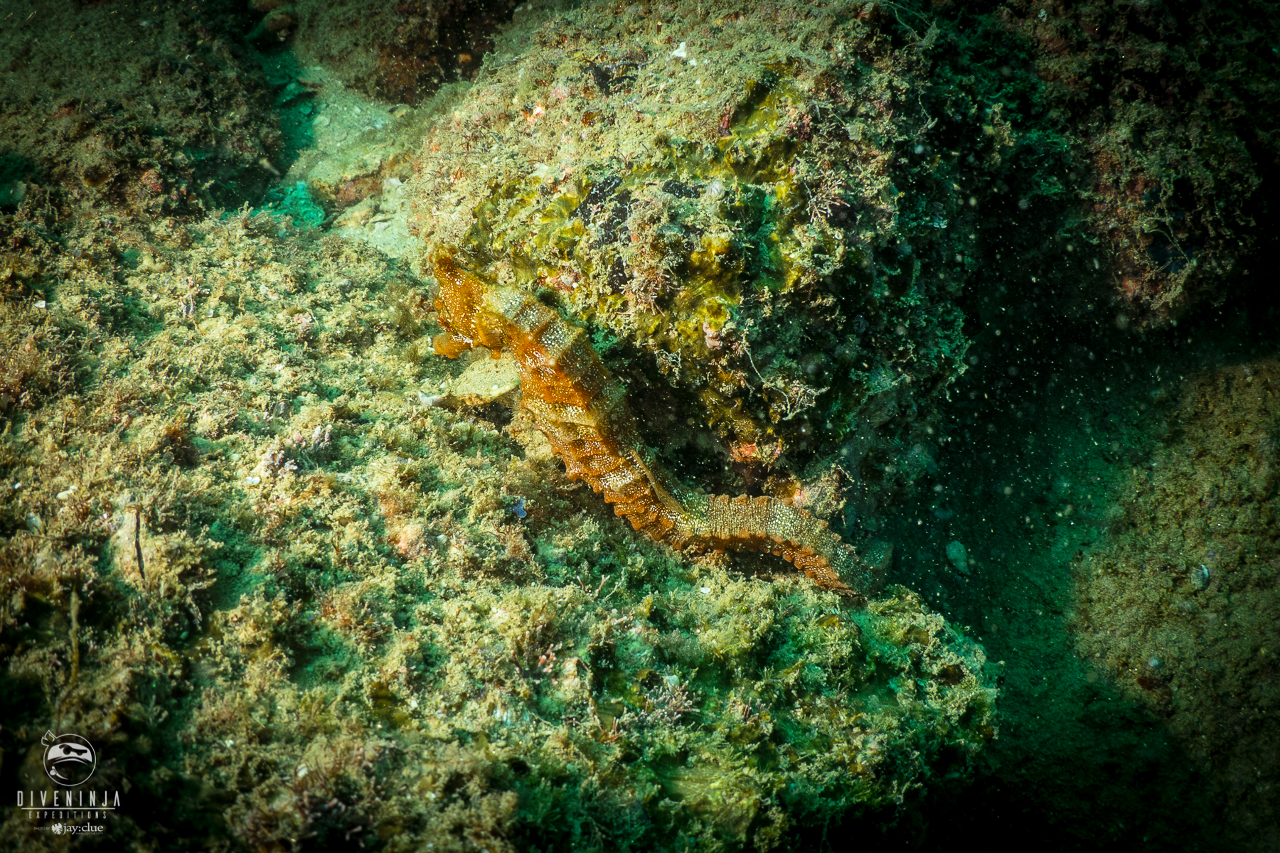 seahorse PADI Women's Dive Day 2018. Cabo San Lucas Mexico