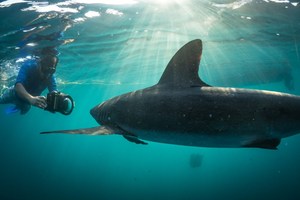Shark diving in Cabo San Lucas with Dive Ninja Expeditions