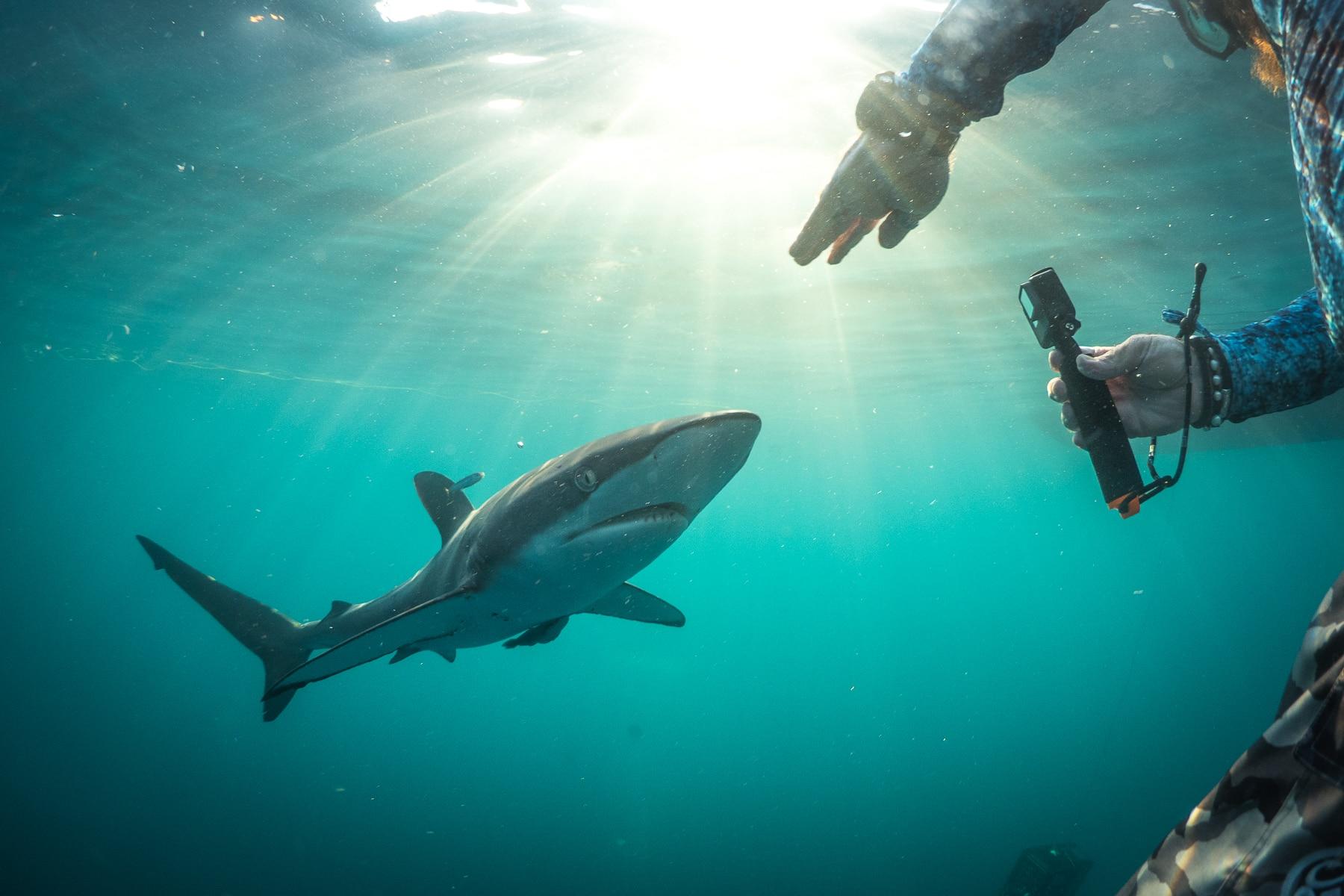 shark Diving in Cabo San Lucas