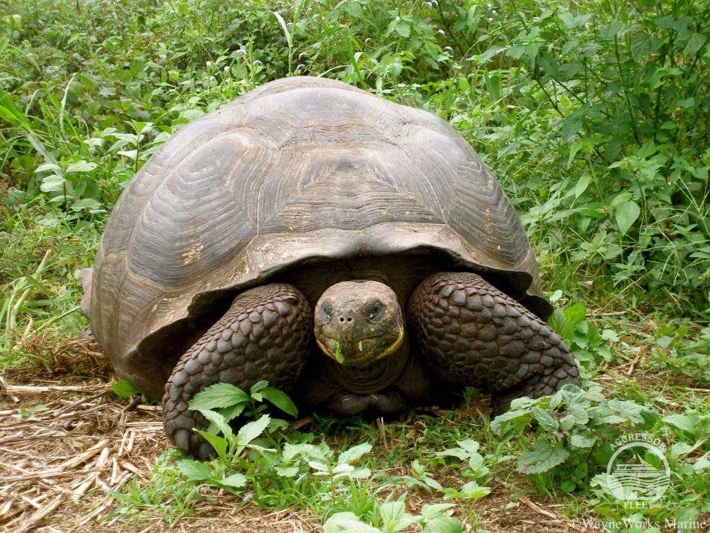 Galapagos Islands tour giant tortoise