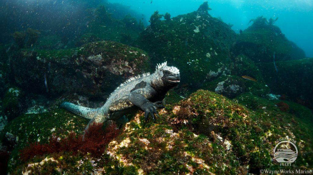 Galapagos Liveaboard diving Mola Mola