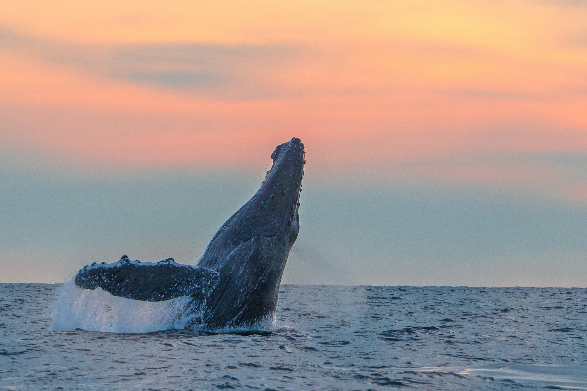 Sunset whale watching tour in Los Cabos, México