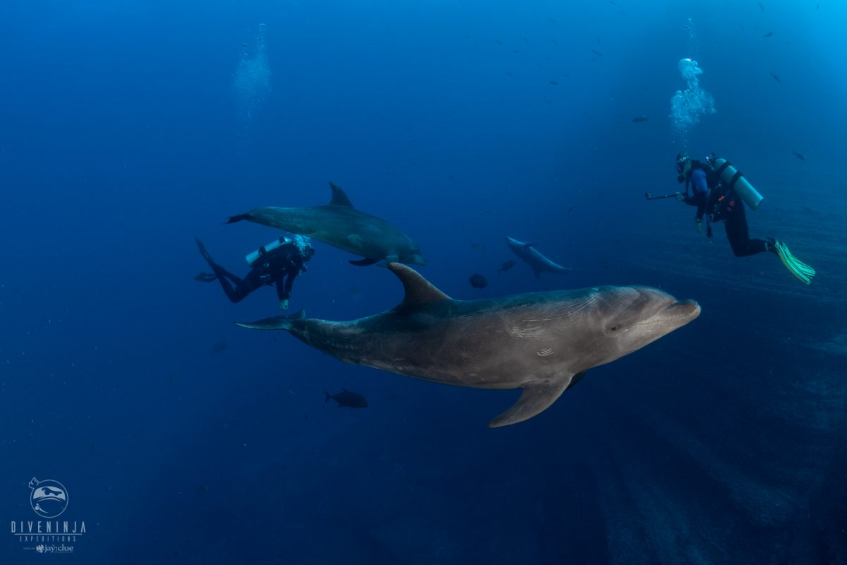 scuba diving with dolphins in socorro