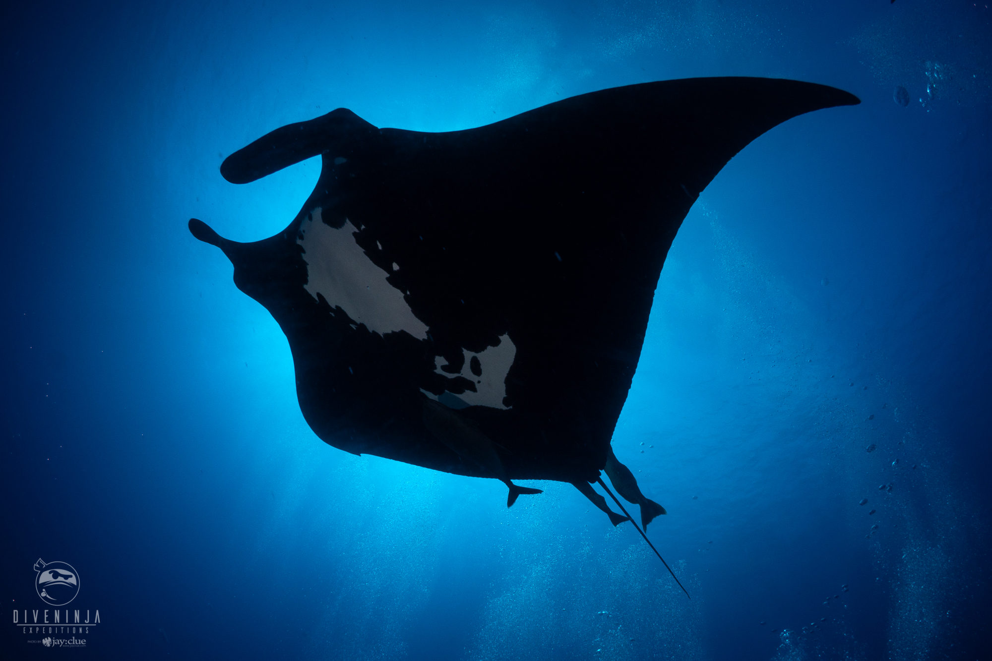 scuba diving liveaboard in Socorro with Dive Ninja Expeditions