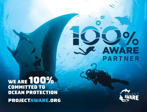 Dive Ninjas – now 100% AWARE!