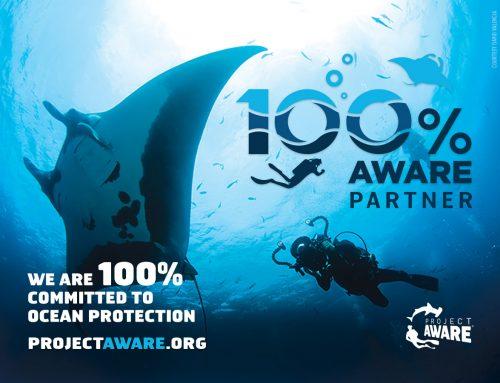 Dive Ninjas – now 100% AWARE!