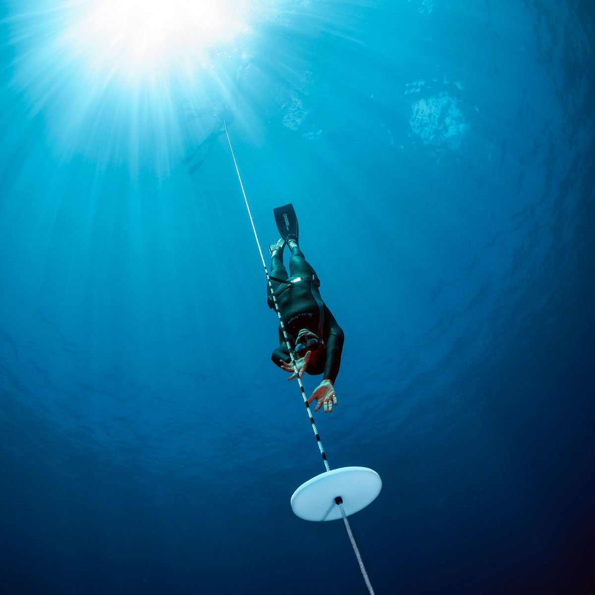 PADI Freediving courses in Cabo San Lucas Mexico