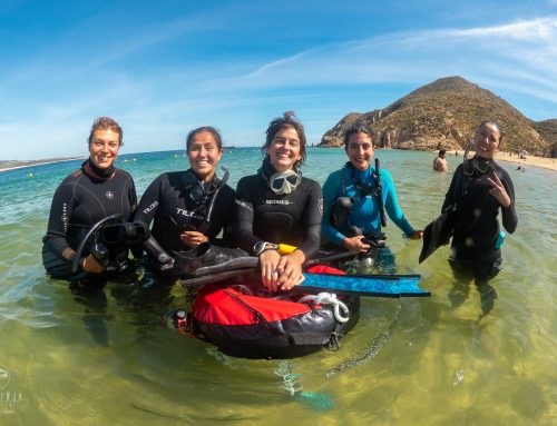 Dive Ninjas opens first PADI Freediving Center in Los Cabos