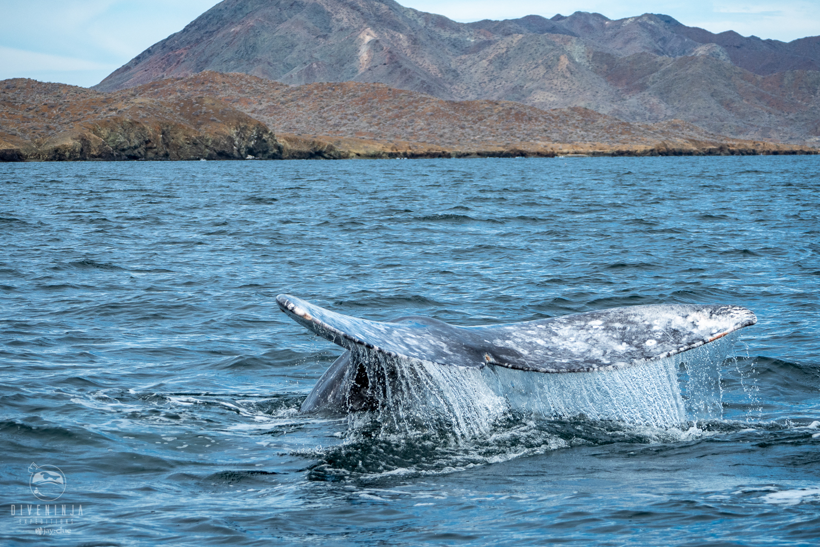 Whale watching tours in Los Cabos, Baja California Sur, Mexico