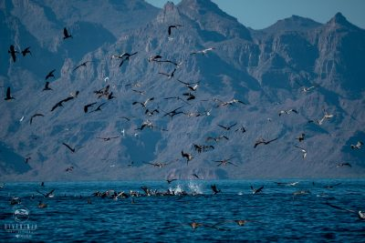 Dive Ninjas Gentle Giants Expeditions 2019 - Whale Watching in Baja California Mexico
