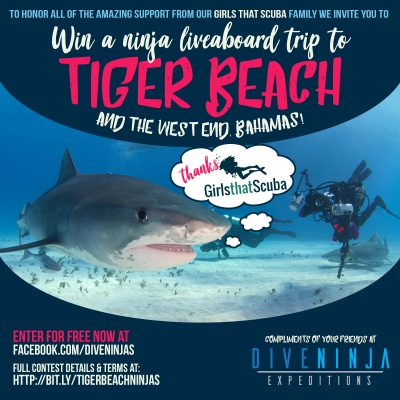 Tiger Beach Bahamas Contest with Girls That Scuba