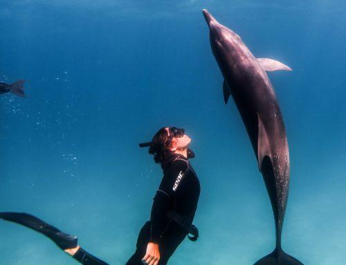 Crossing the Scuba/Freedive Divide