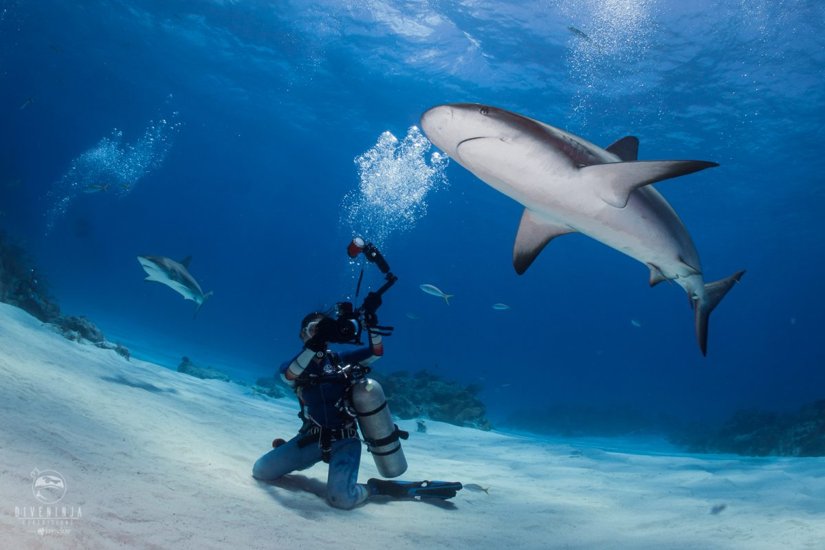 Diving with reef sharks in Tiger Beach Bahamas