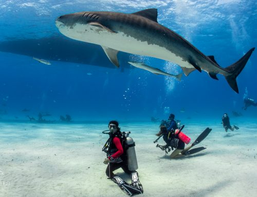 Buy a PADI eLearning course & get a $300 Aggressor trip voucher!