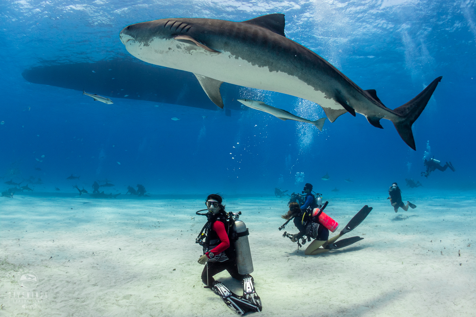 Diving With Tiger Sharks in Tiger Beach Bahamas with Dive Ninja Expeditons