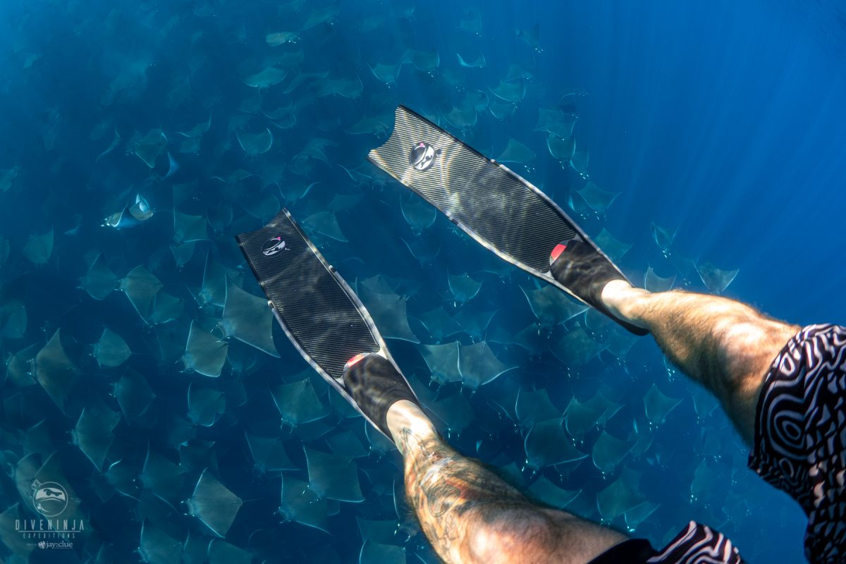 snorkeling with a giant school of Mobula Rays in Baja California Sur Mexico