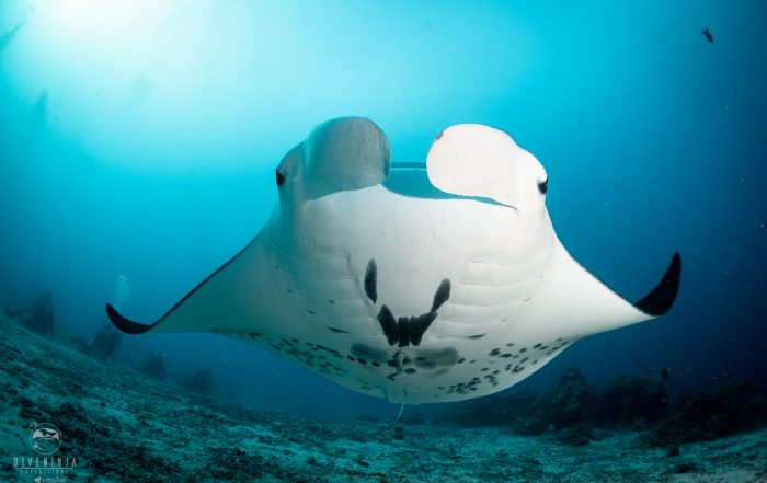 Scuba Diving in Palau with Dive Ninja Expeditions on the Palau Siren liveaboard - June 2019