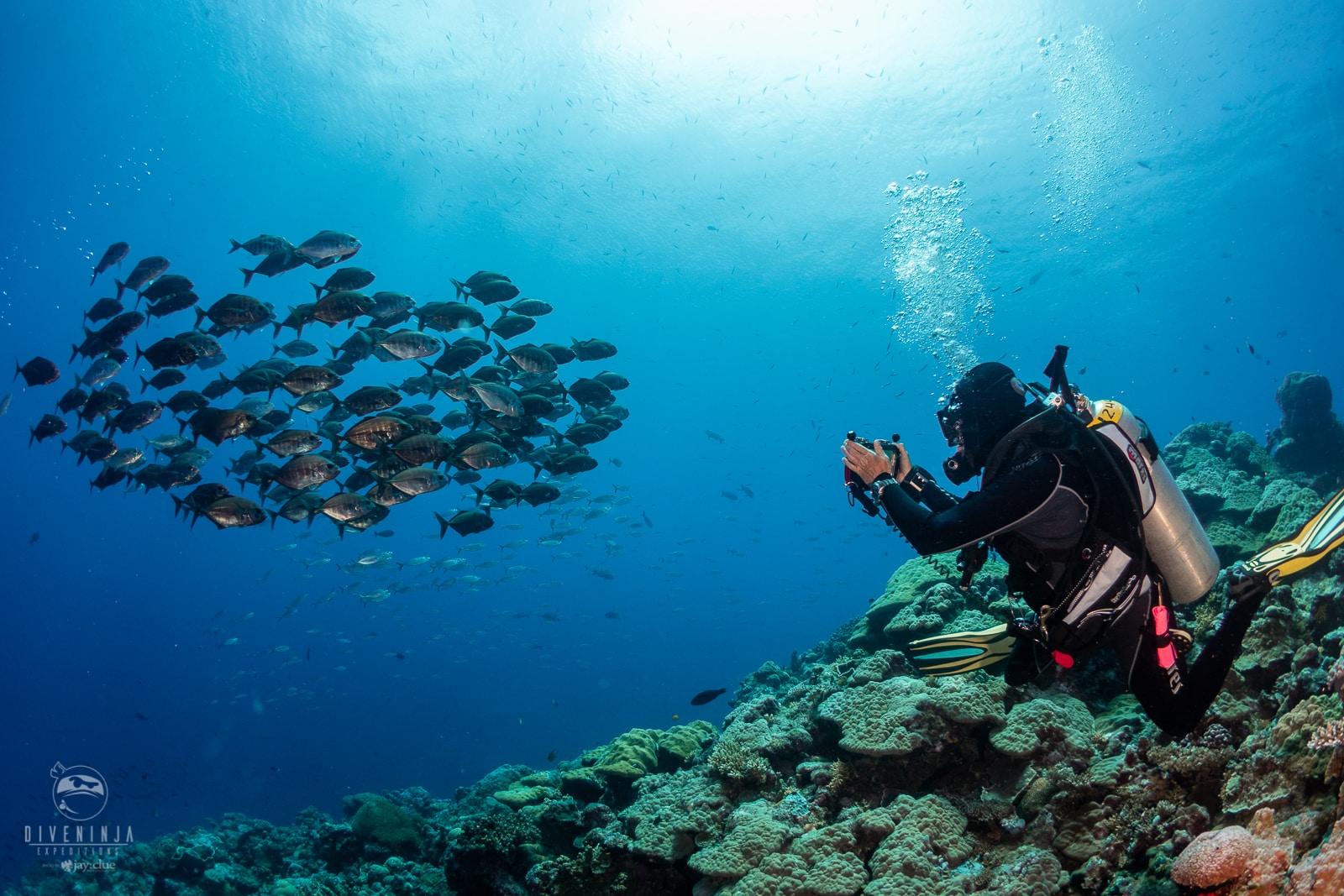 scuba diver taking photo of fish