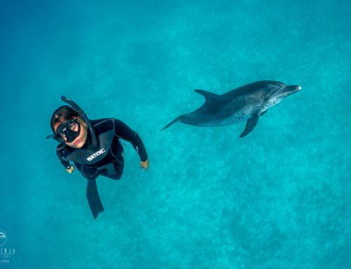 Scuba Vs Freediving