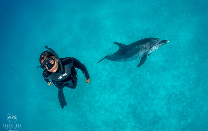 Freediving with Atlantic Spotted Dolphins