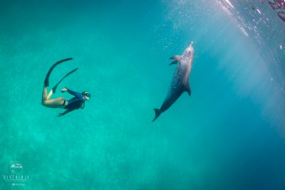 Freediving with Atlantic Spotted Dolphins in Bimini - Dive Ninja Expeditions