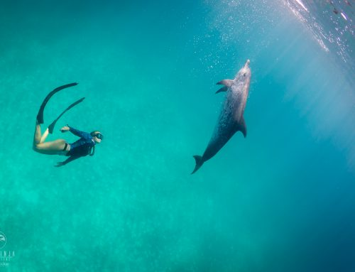 Wild Dolphins in Paradise – Bimini Scouting Report July 2019