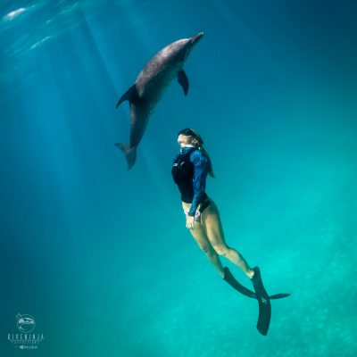 Freediving swimming with Atlantic Spotted Dolphins in Bimini - Dive Ninja Expeditions
