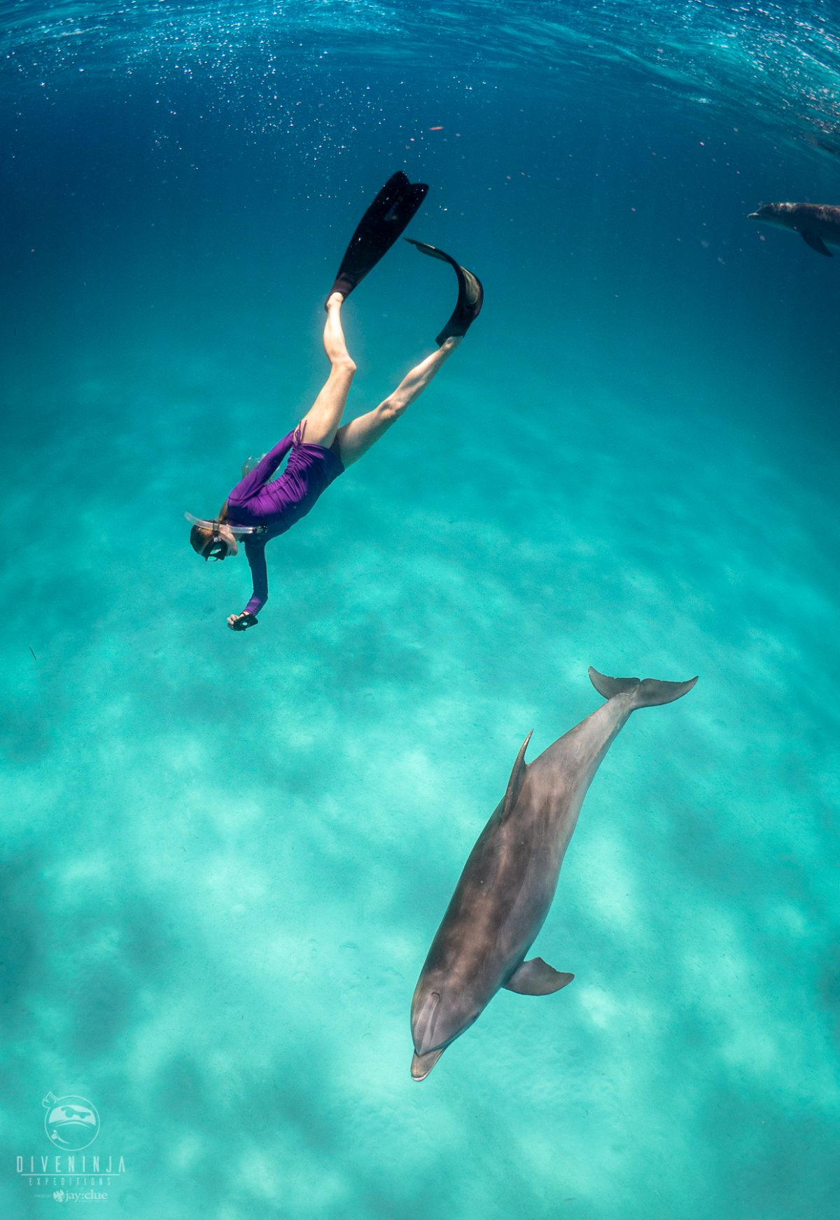 Freediving with Wild Atlantic Spotted Dolphins with Dive Ninja Expeditions