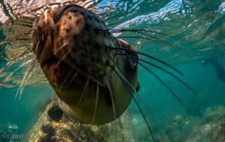 Freediving and snorkeling with sea lions in La Paz