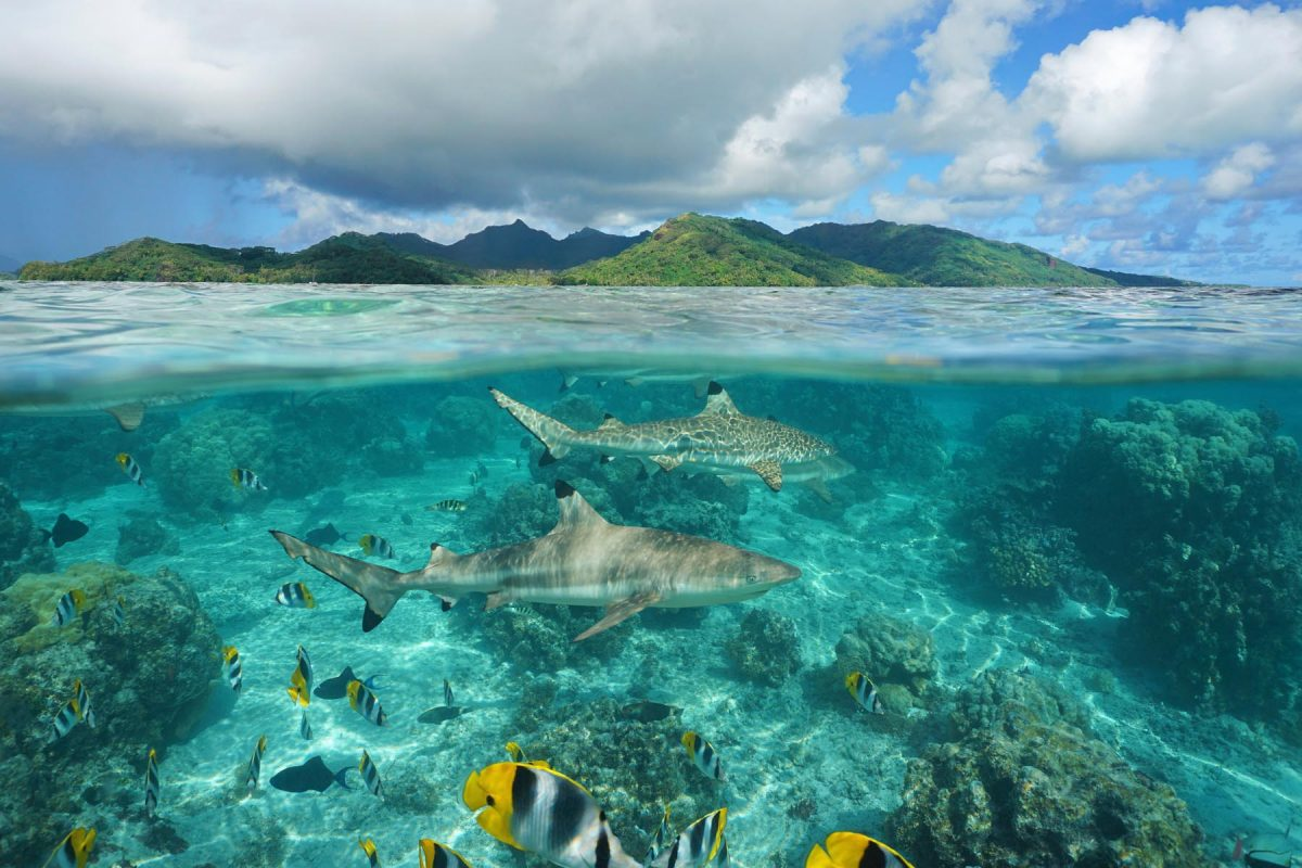Liveaboard scuba diving in French Polynesia