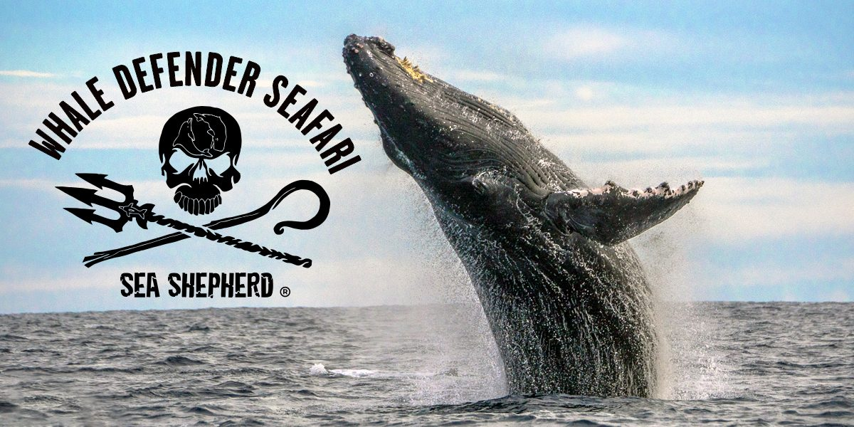 Sea Shepherd whale defender whale watching tour in Los Cabos Mexico