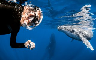 snorkeling with humpback whales in Vava'u, Tonga