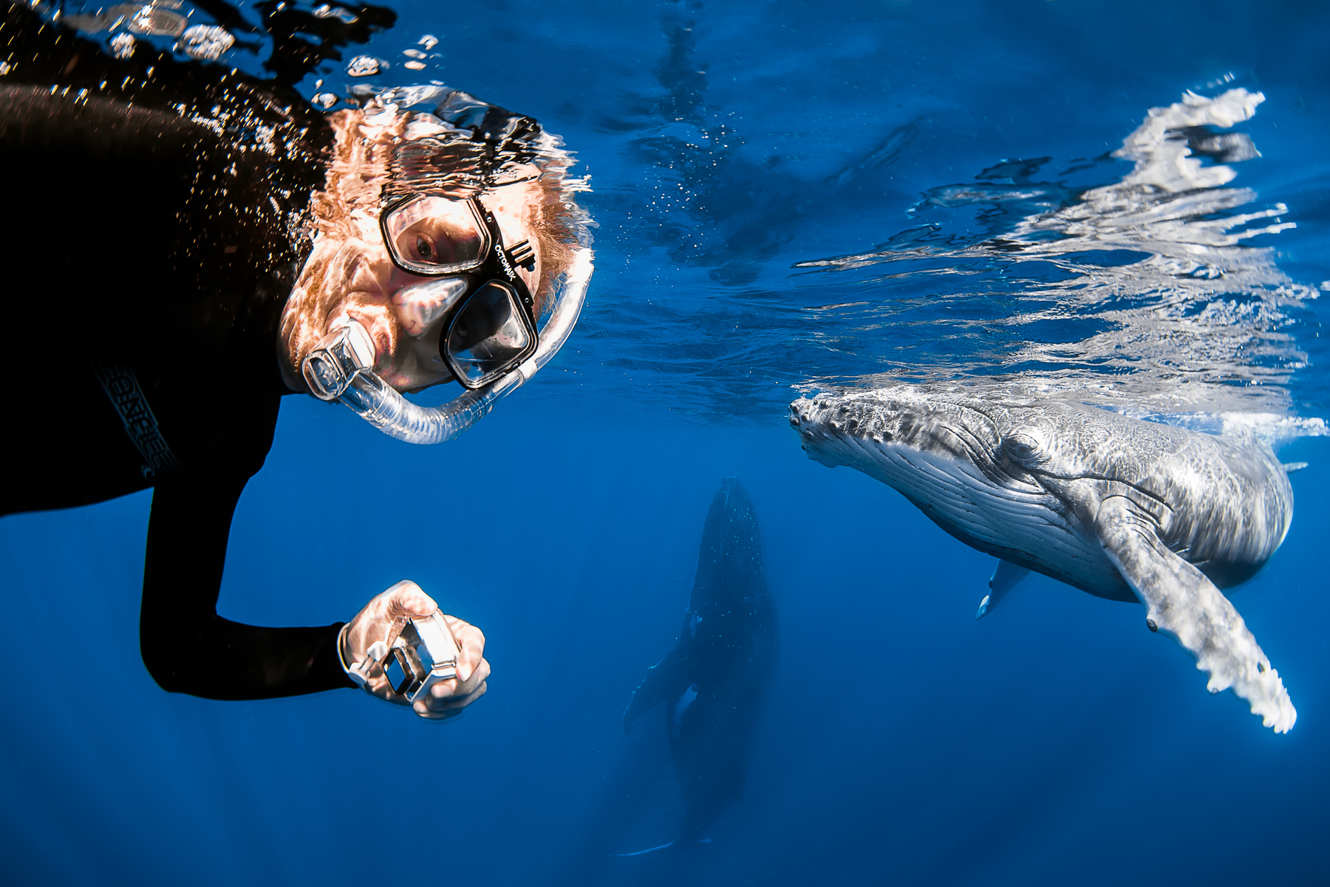 snorkeling with humpback whales in Vava'u, Tonga