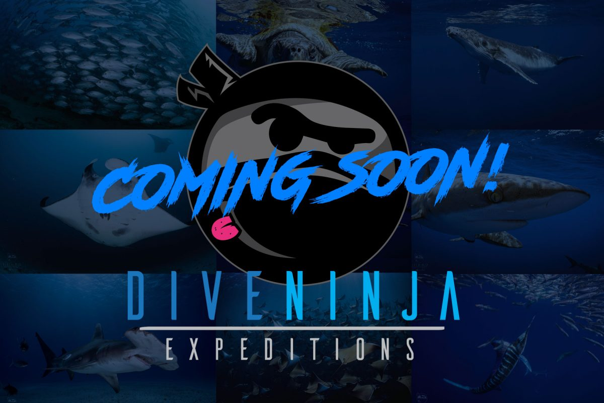 Dive Ninja Expeditions Coming Soon!