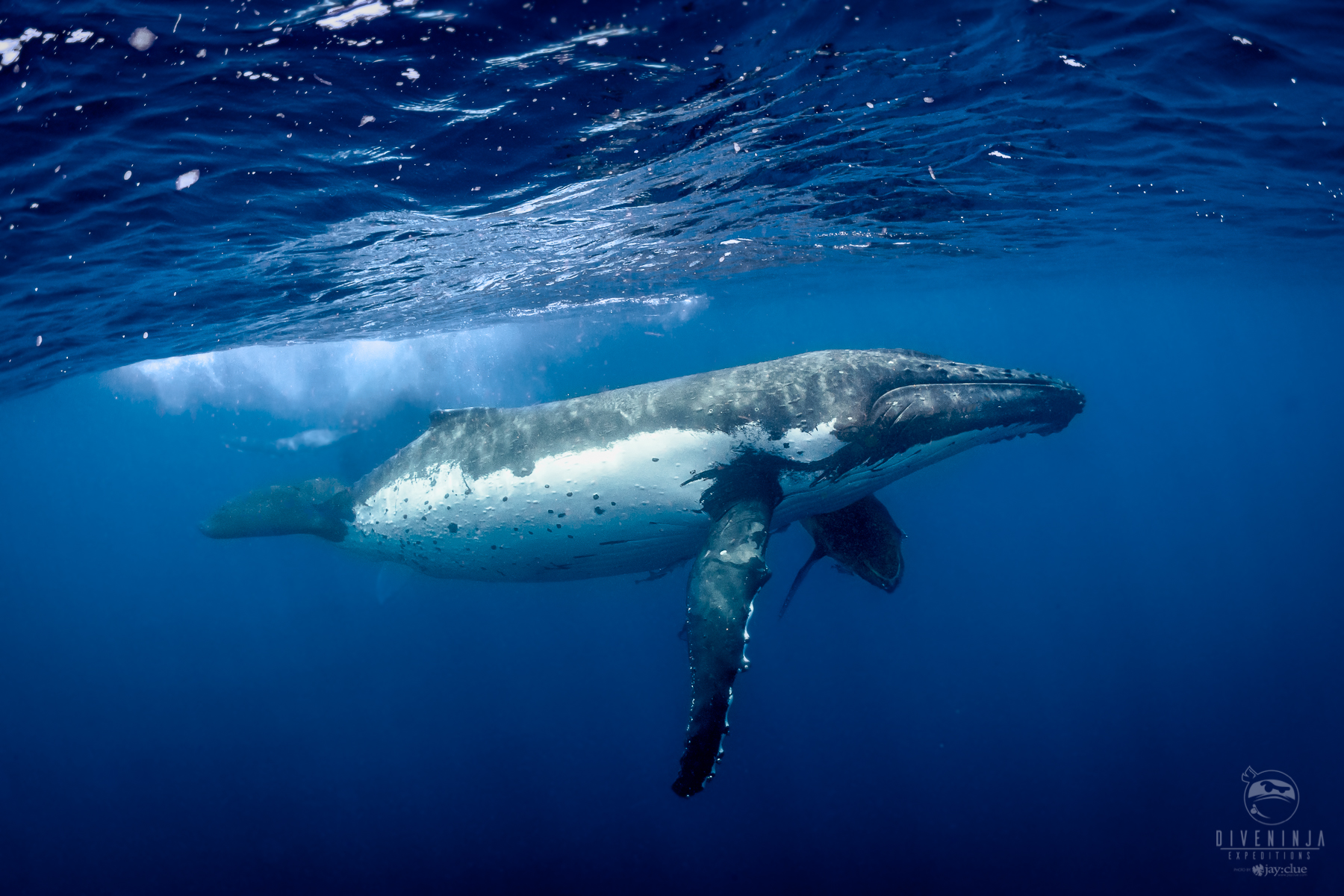 Whale entanglement is a huge issue - find out more in our Ninja Whale Defender course